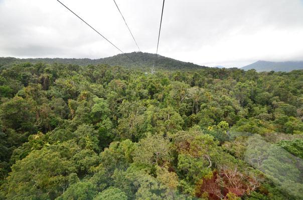 Le Téléphérique de Skyrail Rainforest de Kuranda