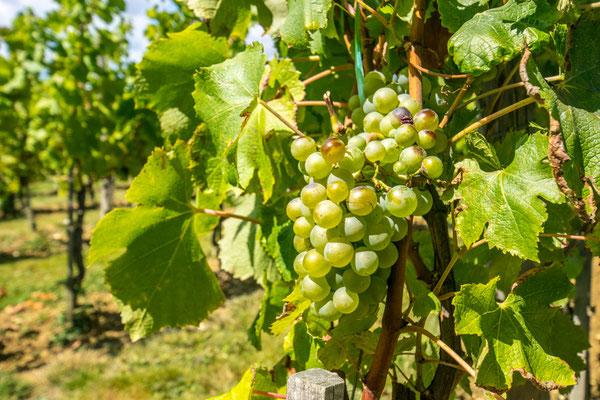 Dégustez les meilleurs vins de Cahors ! Le château des Haute-Serre est une belle adresse !