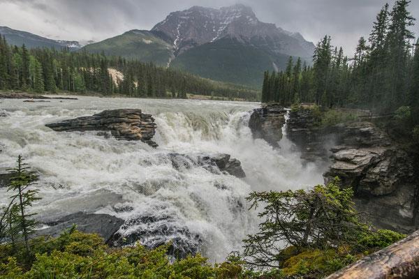Chutes d'Athabasca Sur l'Icefield Parkway au Canada - Auteur : Trip85.com