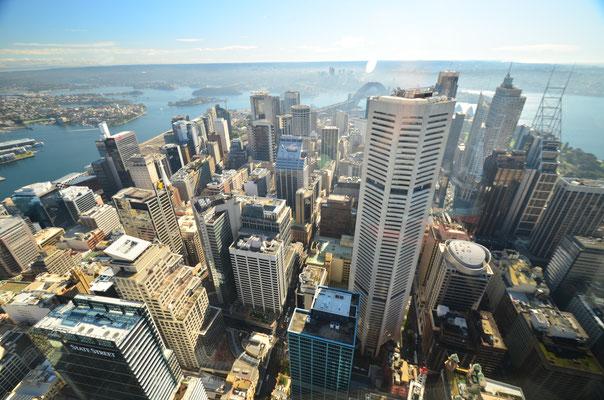 Vue de jour sur Sydney depuis la Sydney Tower !