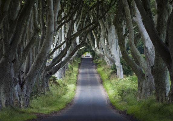 Dark Edges, Décor emblématique de la série Games of Thrones - Crédit Photo : Ireland Tourism - Arthur Ward