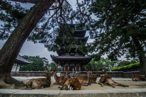 Nara la première capitale du pays - By Trip85.com