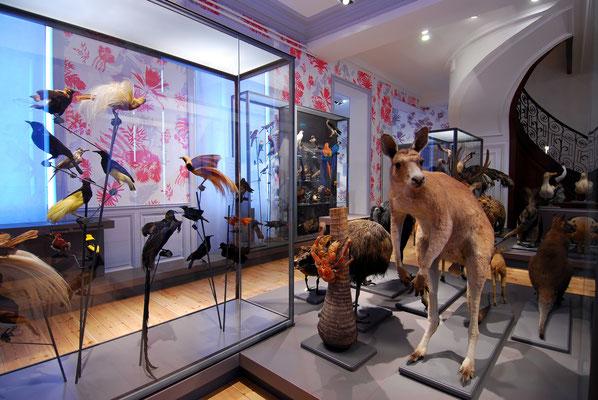 Muséum d'Histoire Naturelle - Francis Giraudon - OT La Rochelle