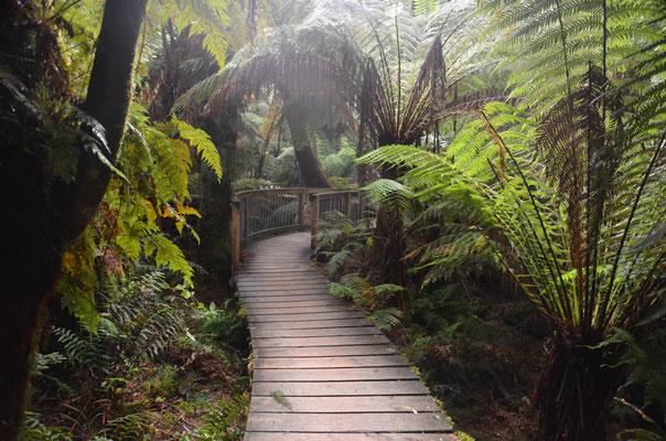 Maits Rest ! Une pause au coeur de la forêt tropicale !