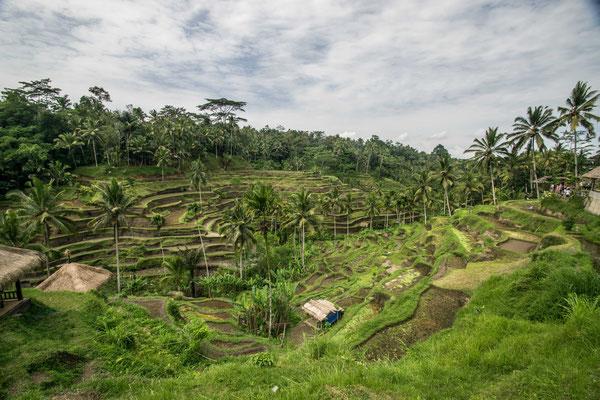 Visiter Bali en hors-saison est parfait ! Moins de touristes ! Plus de bons plans !