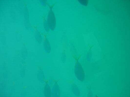 Fonds Marins à Green Island en Australie