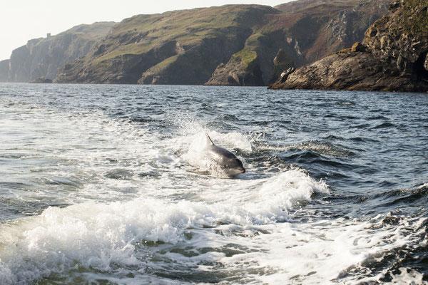 Observation des dauphins - Tourism Ireland