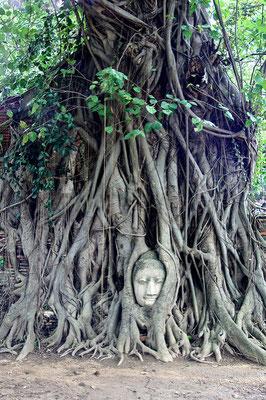 Tête de Bouddha prise dans les racine d'un arbre à Ayutthaya - Source : Flickr.com /  François Philipp