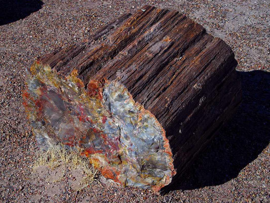 Petrified Forest - By Jon Sullivan [Public domain], via Wikimedia Commons