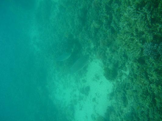 Faire du snorkeling à Green Island