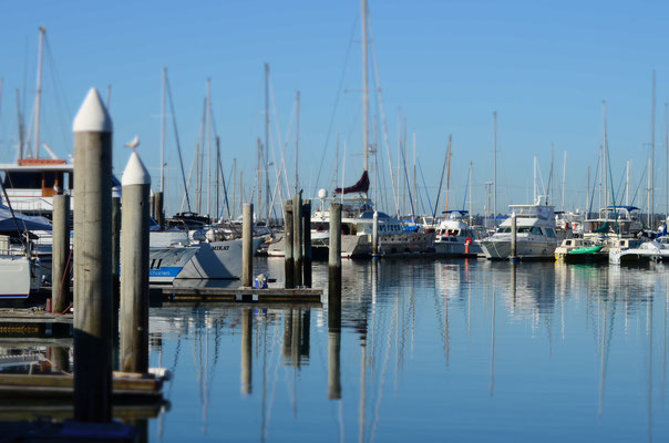 Monter à bord du bateau à Hervey Bay pour observer les baleines !
