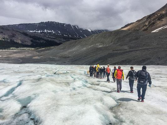 Randonnée sur la glacier Athabasca !