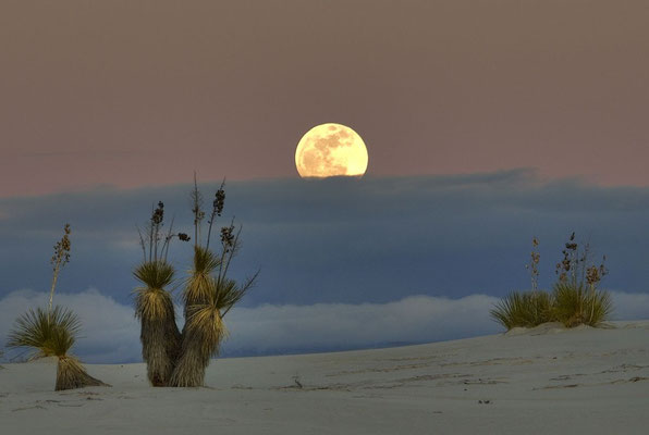 Randonnée nocturne à White Sands ! Crédit Photo : By snowpeak (Peekaboo Moon  Uploaded by PDTillman) [CC BY 2.0 (http://creativecommons.org/licenses/by/2.0)], via Wikimedia Commons