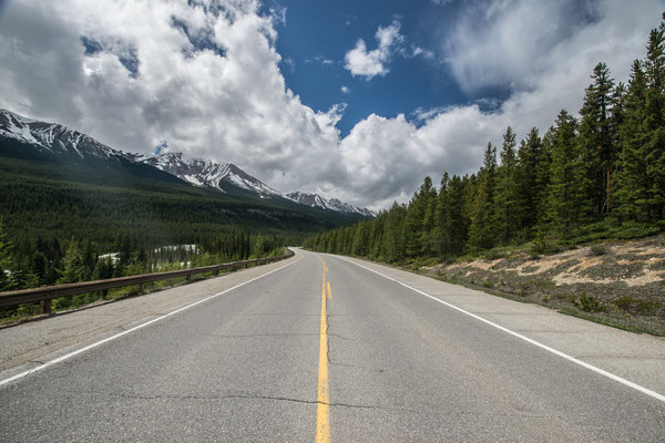 Sur l'Icefield Parkway