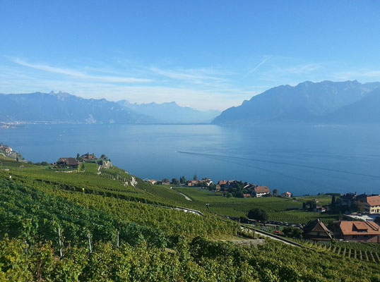Les vignobles de Lavaux - Crédit Photo : By Theo Baracchini (Own work) [CC BY-SA 3.0 (http://creativecommons.org/licenses/by-sa/3.0)], via Wikimedia Commons