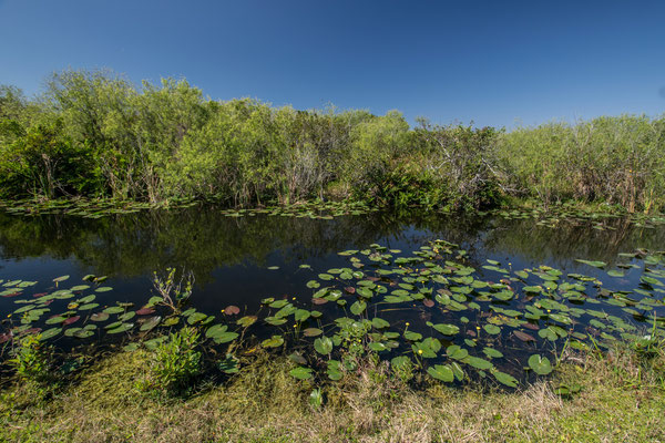 Shark Valley dans les Everglades en Floride
