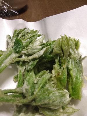 ヤマウドの芽の天ぷら