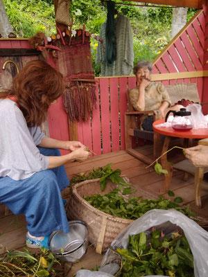 藍の葉を茎からちぎります。一回分(Tシャツ一枚分くらいかな)が150グラム。