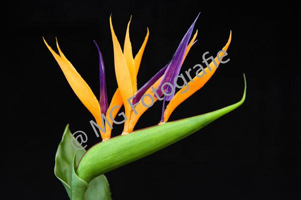 Bloemen010