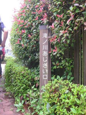 本コースメインの「滝ノ川あじさいロード」入口