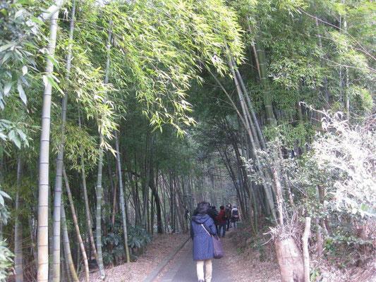 竹林で森林浴