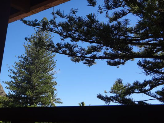 Viele Nadelbäume