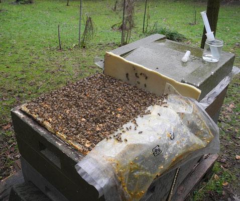 Mit dem Träufeln warten, bis sich die Bienen in die Gassen zurückgezogen haben