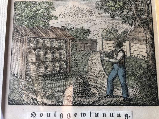 Honiggewinnung