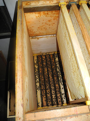 """Innenansicht, unmittelbar über den Bienen fehlt hier die Folie die aber als Bausperre und obere """"Begrenzung"""" der Beute sein muss; Durchschlupf von einigen cm2 reicht"""