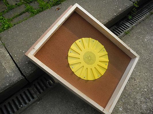 Bienenflucht - Unterseite
