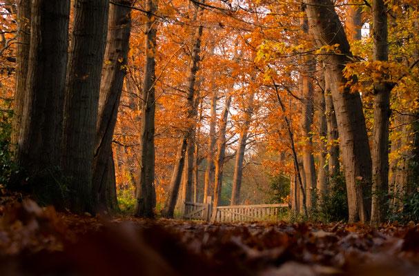 © Claudia Terpstra / Herfst in het Scharlakenbos