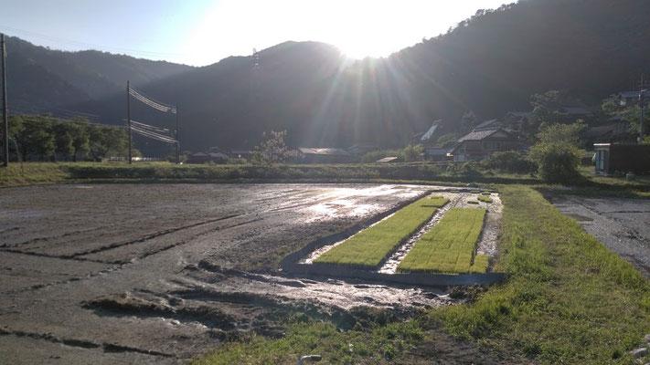 ▲農繁期の始まりの季節です。
