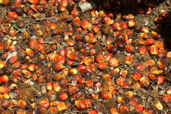 Palmöl Früchte
