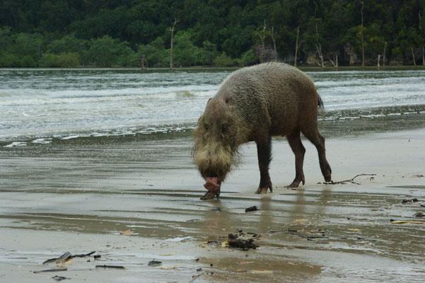 Das grausliche Wildschwein