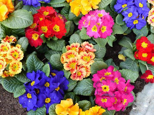 Das Wetter ist nicht danach - aber der Frühling kommt sicher bald