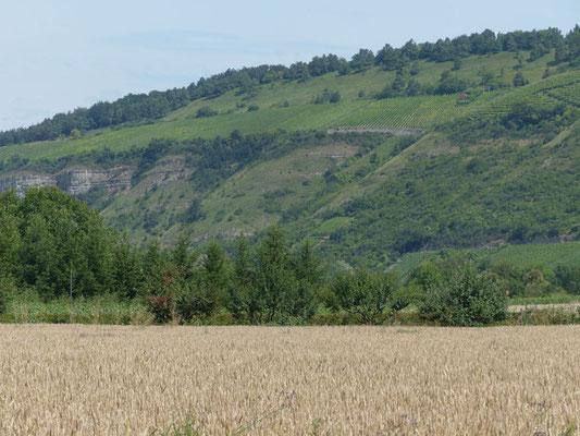 Blick auf die Weinberge