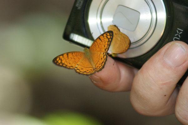 Ein Schmetterling fühlt sich wohl auf Svens Finger