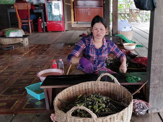 Extraction de la soie de Lotus