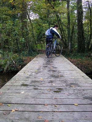 Randonnée à Vélo en forêt