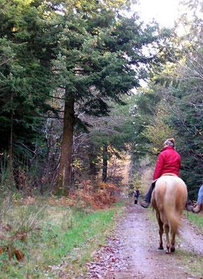 Equitation en forêt de Camors