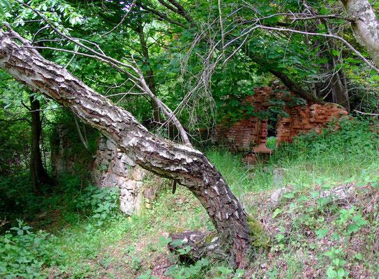 Ruine der Steigerwohnung.