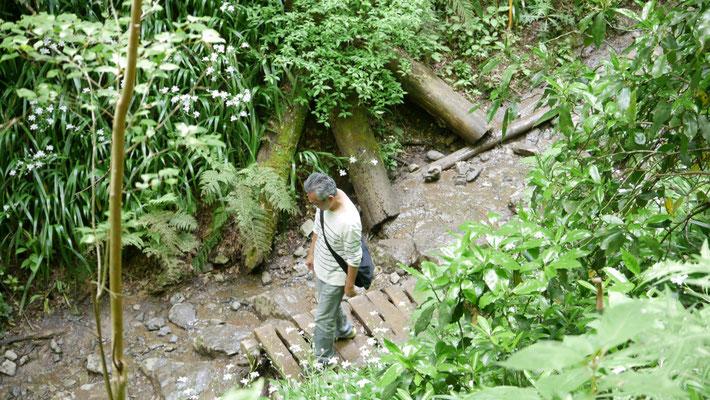 下っていくと、やがて登山道の脇に小さな沢が現れます。