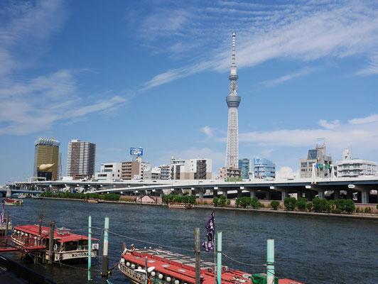 隅田川に設けられた遊歩道から東京スカイツリーを望みます。