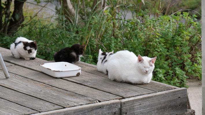 島内には、猫たちがのんびりと暮らしています。