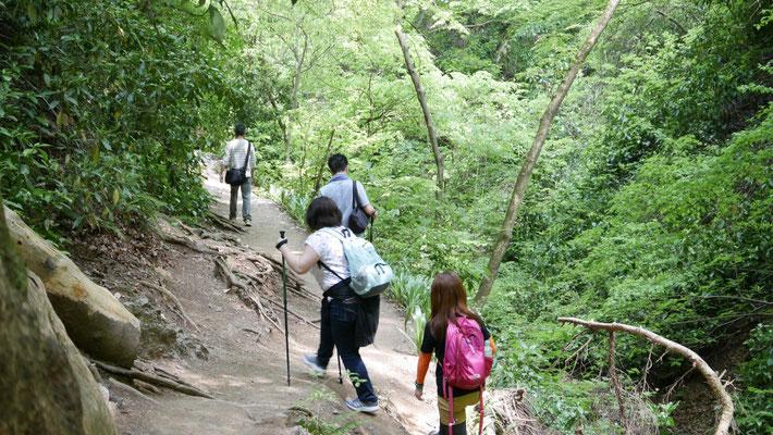 1号路とはだいぶ登山道の感じも違いますね。