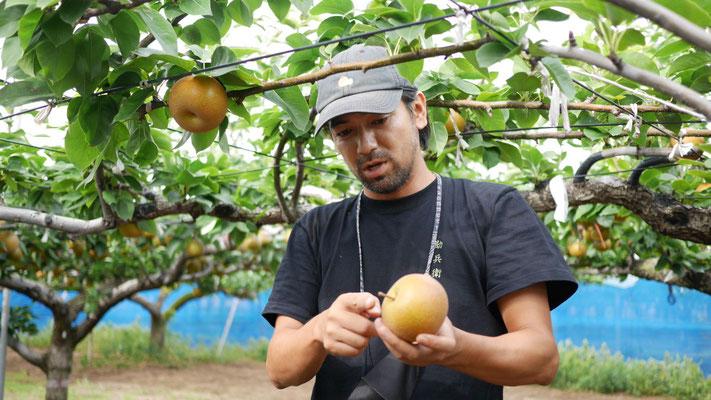 梨に対する深い愛情と造詣があふれる、園主 石井庸一さん。