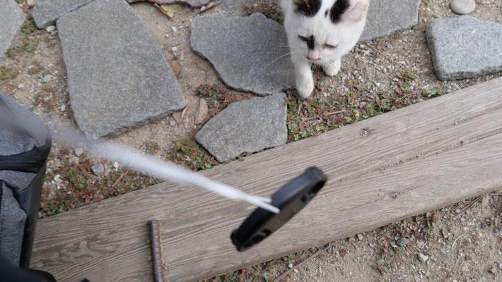 子猫がカメラキャップに反応し、近寄ってきてくれました。