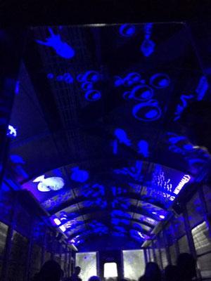トンネルに入ると、天井がライトアップされます。