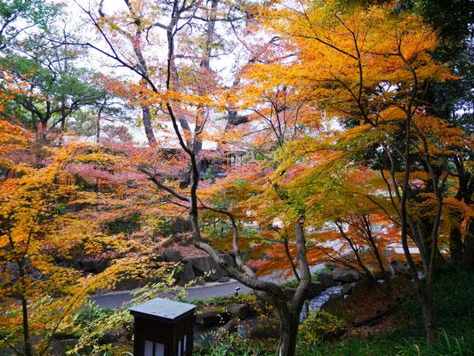 高低差を利用した徳川園。滝から渓谷、池に至る広い世界観を表現するのは、日本庭園の特徴のひとつ。