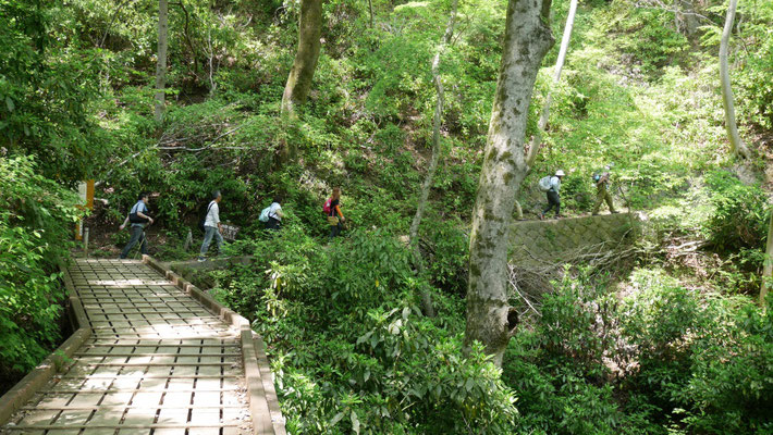 登山道は整備が行き届いています。これも高尾山の魅力のひとつ。